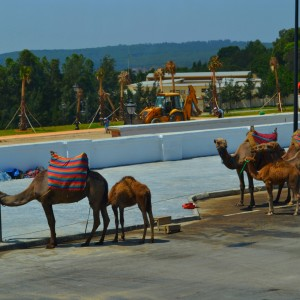 summer camps for teens, one day trip to Morocco