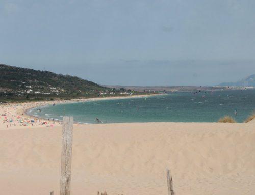 Proteger el océano: Lenguaventura recomienda cinco cosas