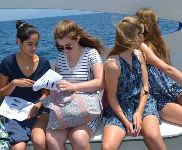 Activity-and-Sport-Summer-Camp-Tarifa-Spain, whale and dolphin watching